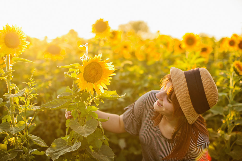 fields of sunflowers in Iowa for photos