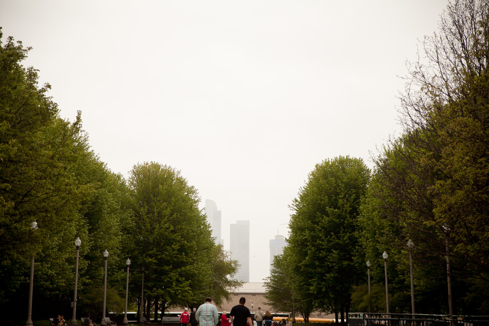 chicago skyline with trees at millennium park