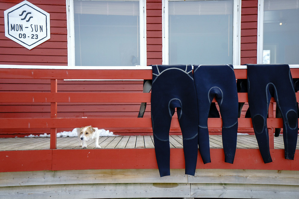 Upon arrival at the Surf Camp, we were greeted by the small house dog, who, on this day, was tasked with protecting the damp wetsuits as they dried.