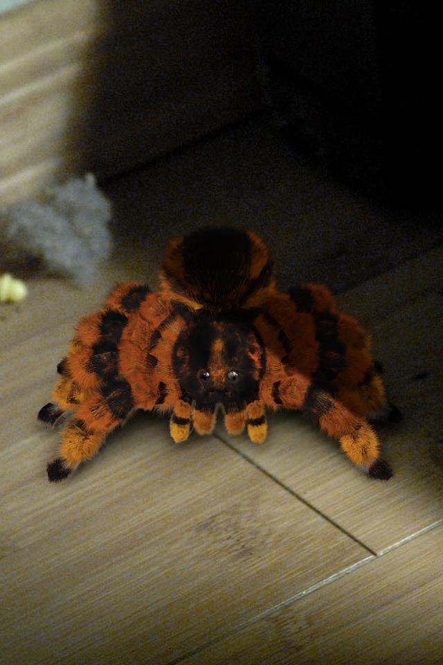 tarantula_fur_test_v013.jpg