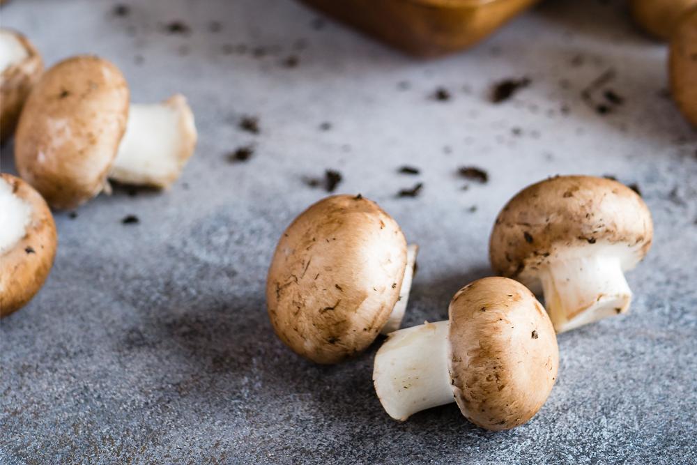 Mushrooms v2.jpg