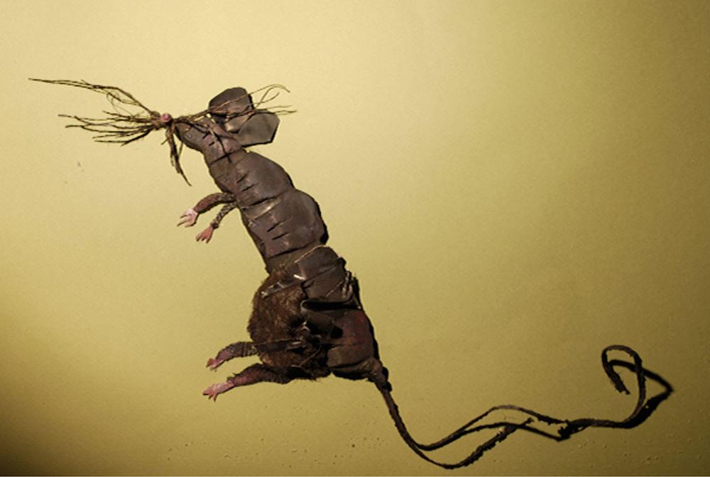 rat 4.jpg