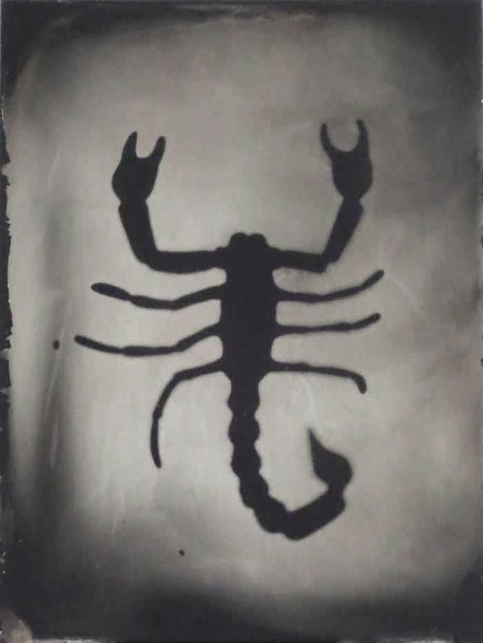 Scorpion,  Tintype, Jenn Libby, 2015