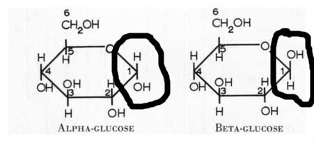 The circled parts determine whether a glucose molecule is alpha or glucose.