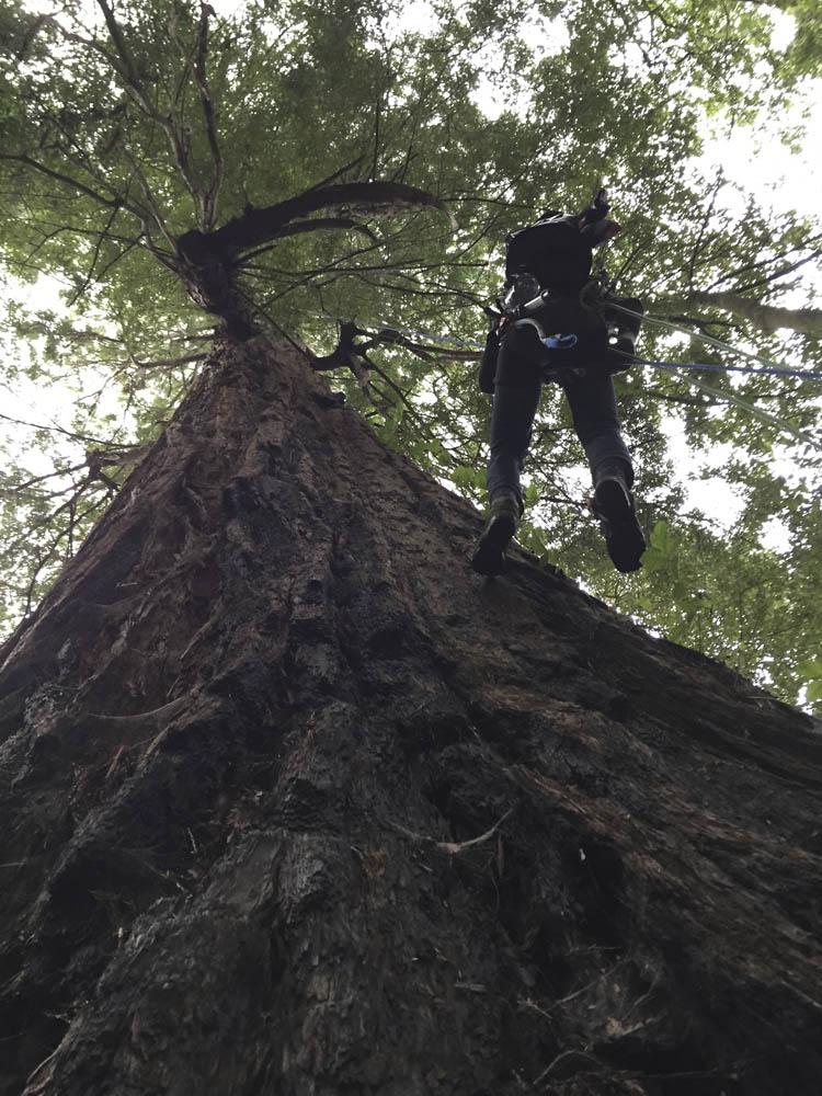 Moloughney Designs Big tree research 00
