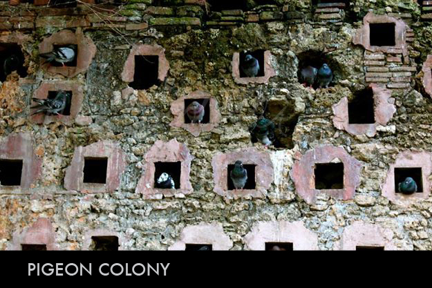 Pigeon Colony.jpg
