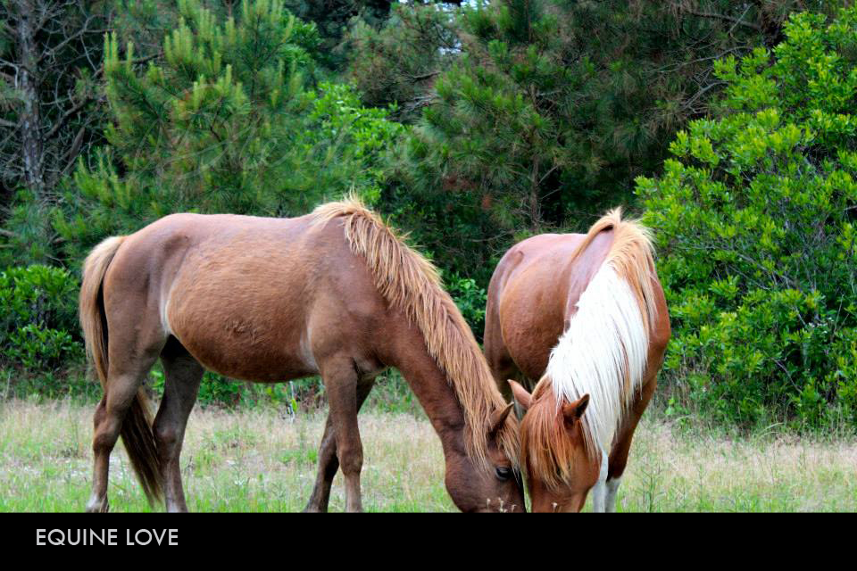 Equine Love.jpg
