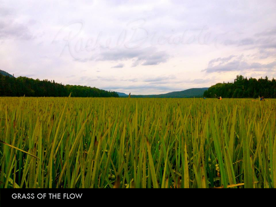 Grass of the Flow.jpg