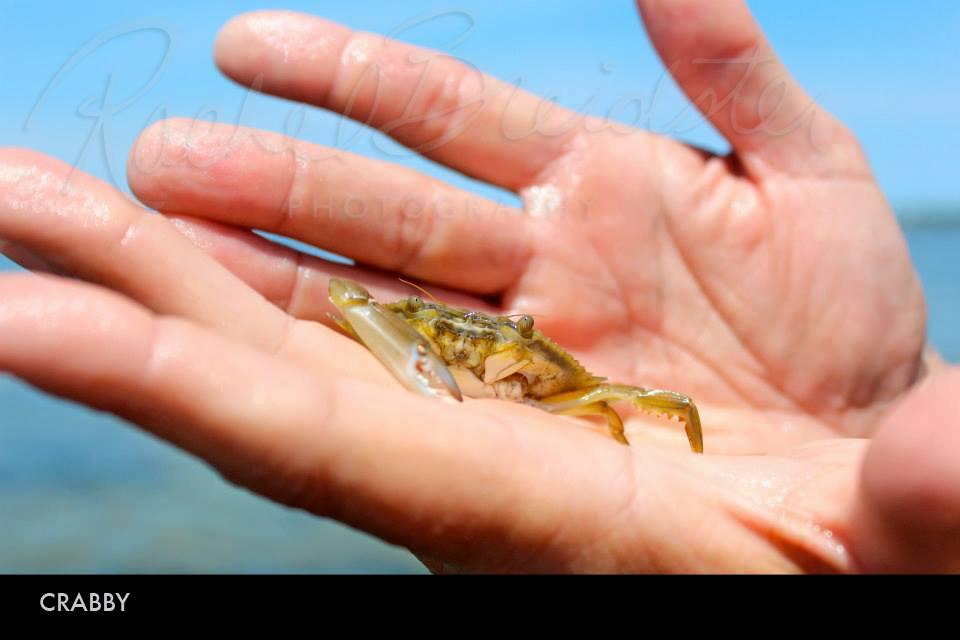 Crabby2.jpg