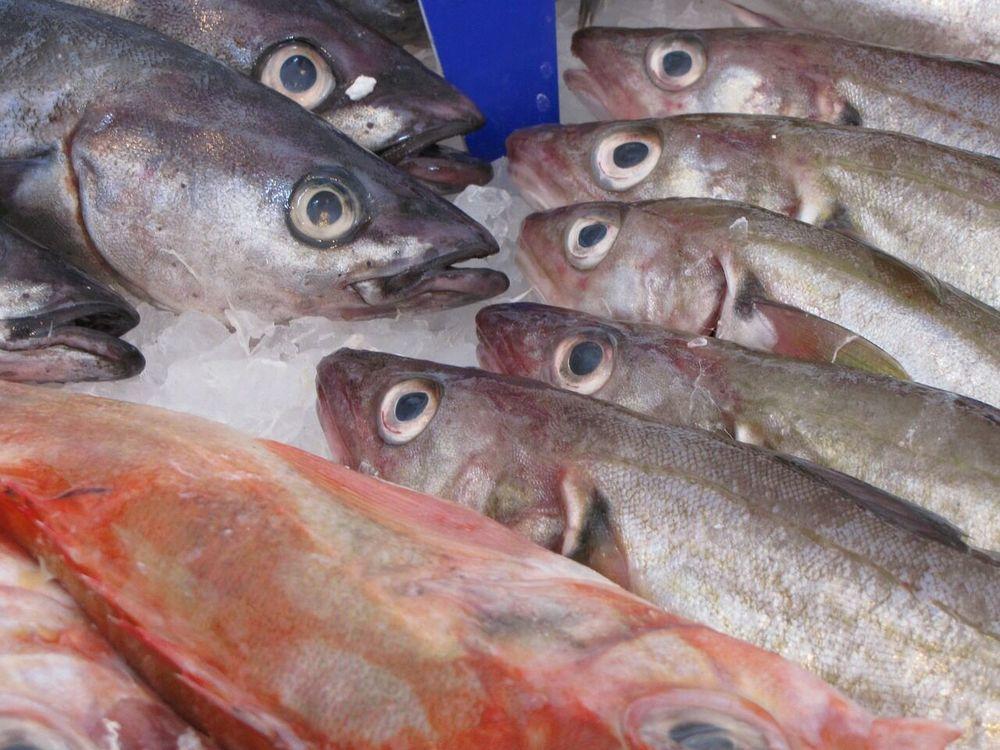 fish-214850_1280.jpg