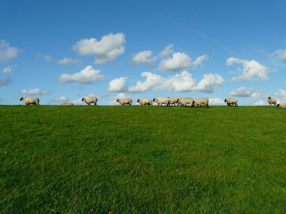From feeding to weaning   The Farm Table links you to sheep & wool production information