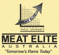 Meat Elite