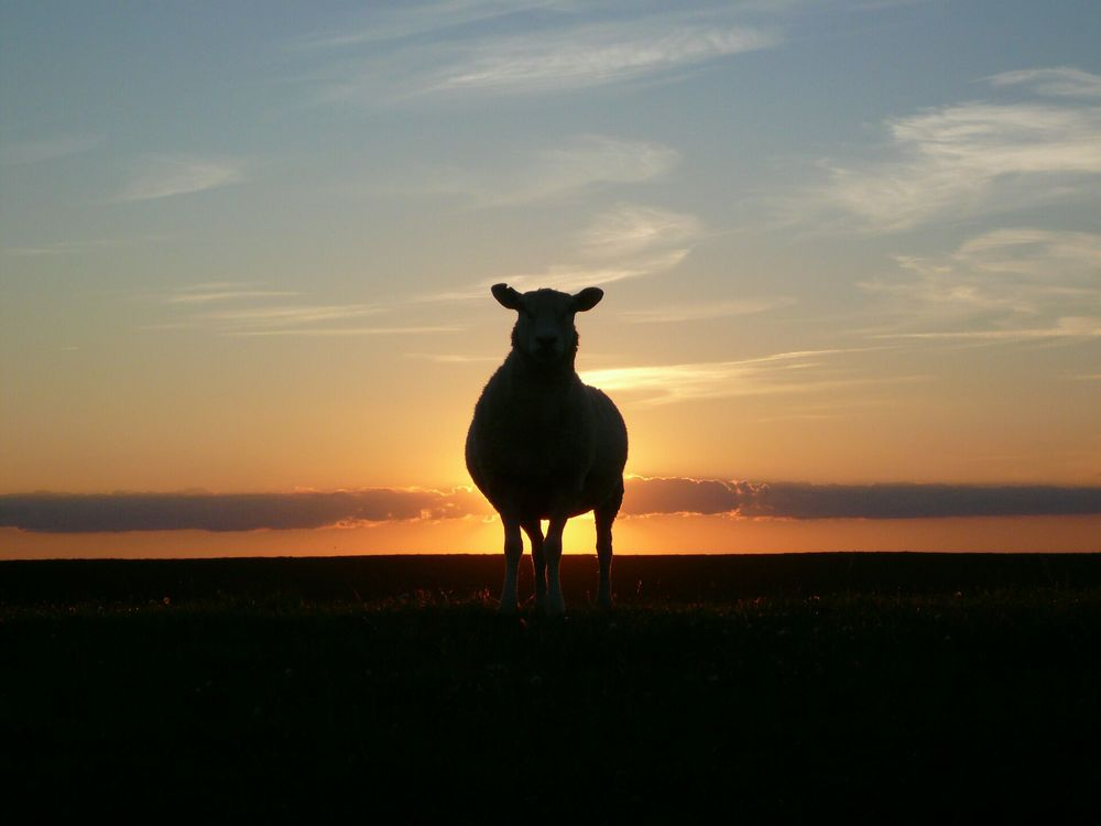 The information is out there But it's often hard to find   THE SHEEP TOOLBOX IS HERE TO HELP