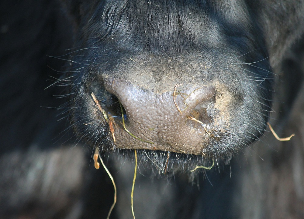 Access a range of information relating to the health of your cattle   Right here!