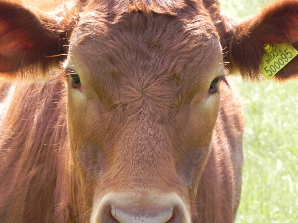 Need information on the nutrition requirements of your cattle?   CHECK OUT THESE RESOURCES