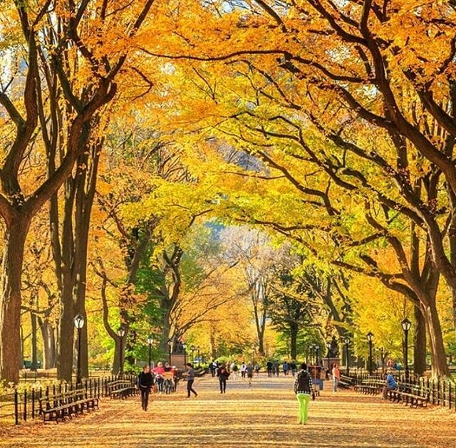 Happy Saturday friends. . . . . #nyc #photography #saturday #centralpark #inspiration #music #relax #walk #friends #new #comingsoon #2019 #life #positivevibes #autumn #fall #weather #drums #guitar #bass