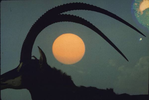 liquidnight :     Carlo Bavagnoli - Profile silhouette of Giant Sable Antelope with setting sun framed in his antlers, probably on the Luanda Preserve, Angola, Africa, 1968   [From the   LIFE  magazine Photo Archive ]