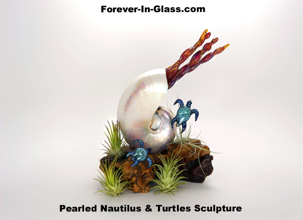 Pearled Nautilus & Turtles on Burl2.jpg