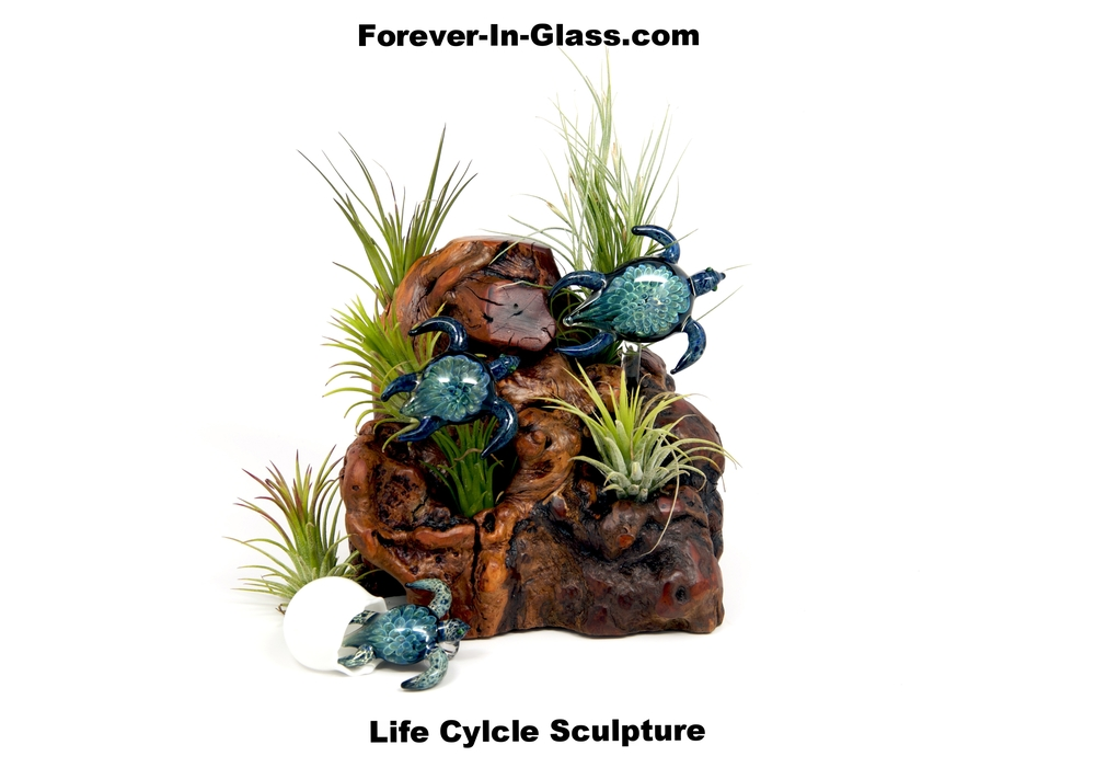 Life Cycle - Turtles over Burl.jpg