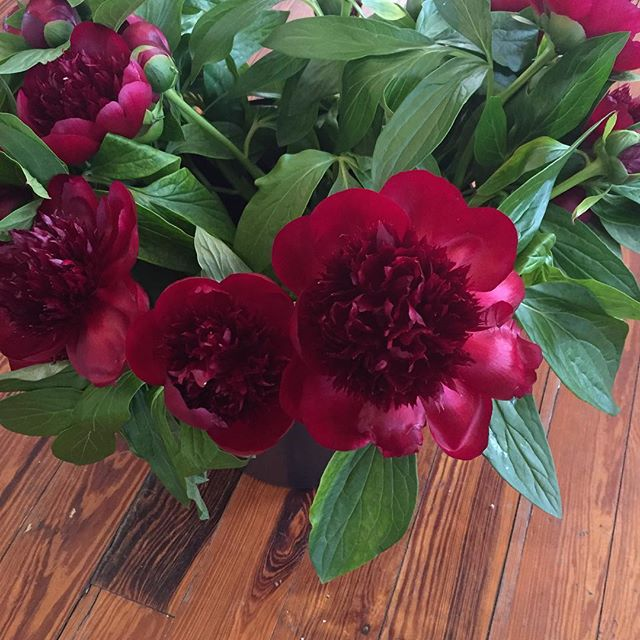 These burgundy peonies @floristfire has today are drop dead gorgeous. So unique! #vhsweddings #vintageheightsstudio #floristfire #tampaflorist #lovewhatyoudo #peonies #tampaweddings