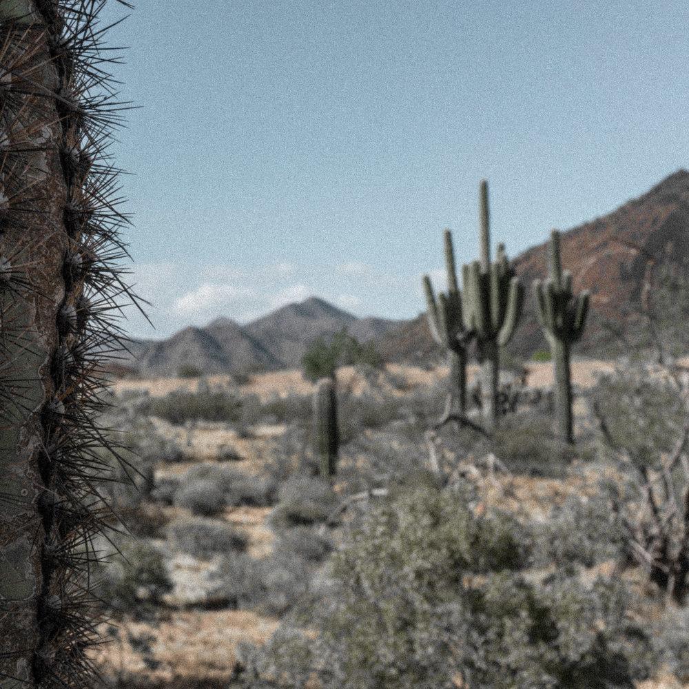 march desert_-4.jpg