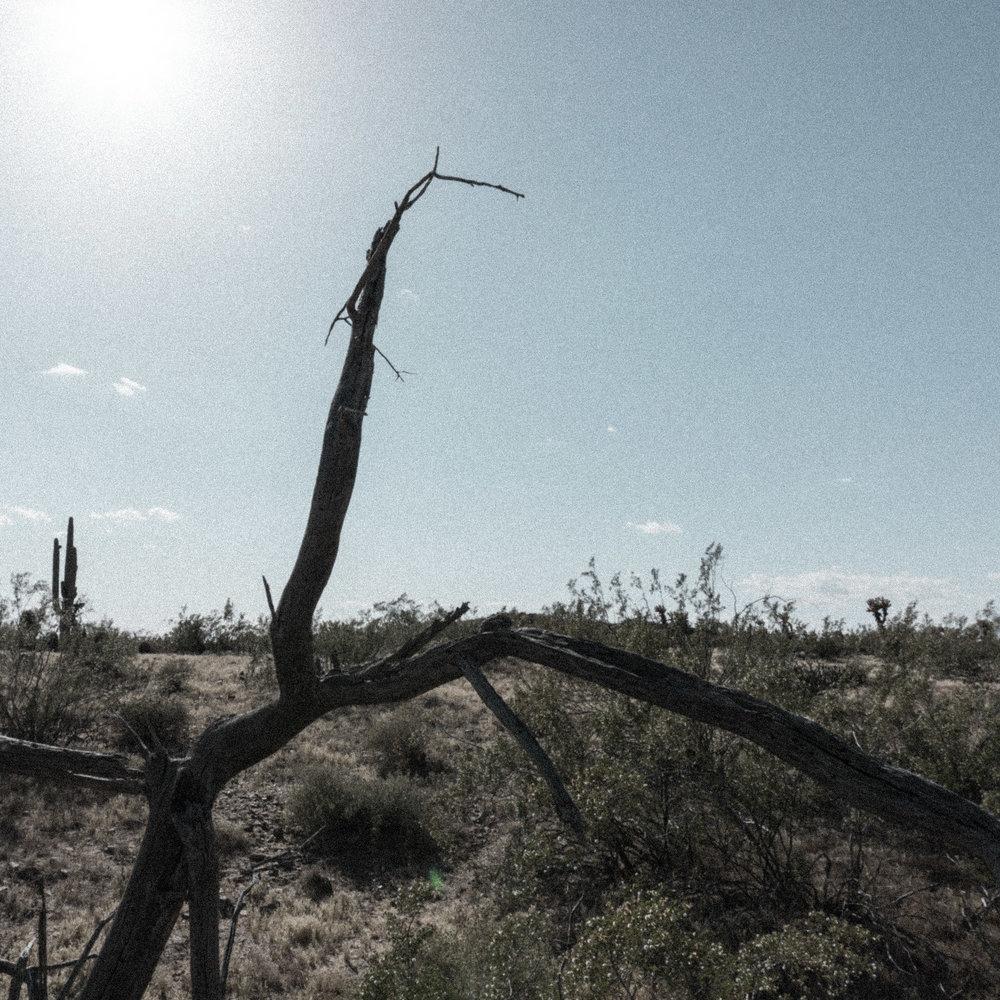 march desert_-5.jpg