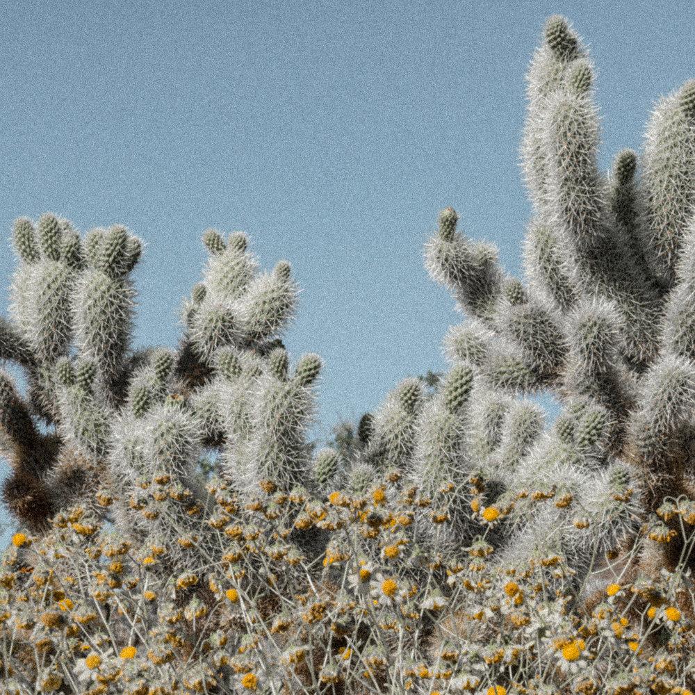 march desert_-7.jpg