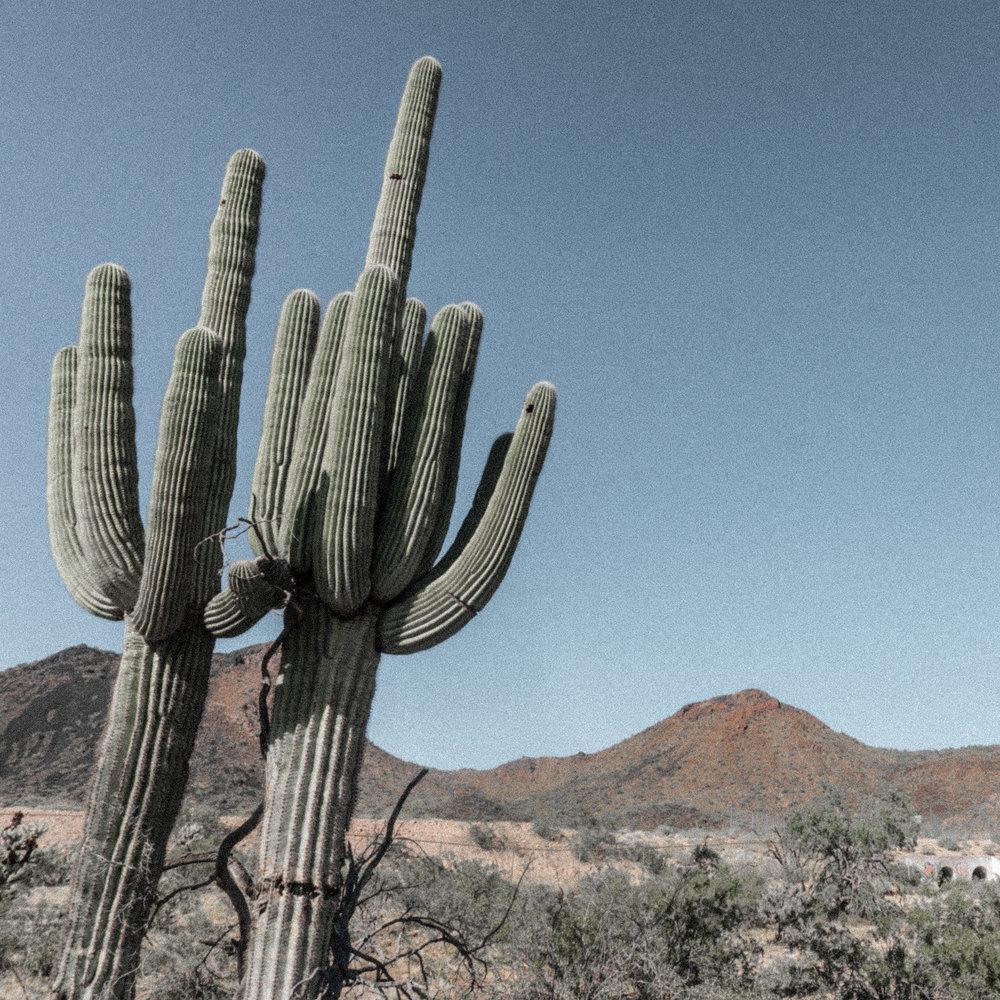 march desert_-6.jpg
