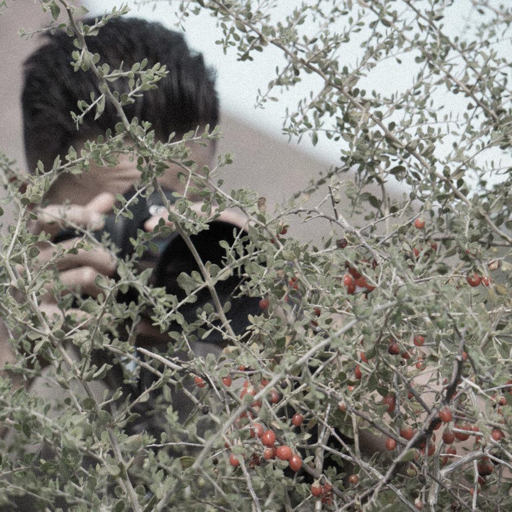 march desert_.jpg
