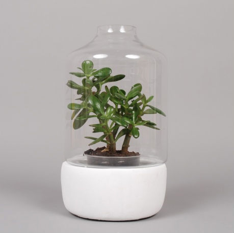 Greenhouse Pot
