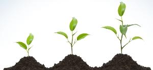 homaj-growth