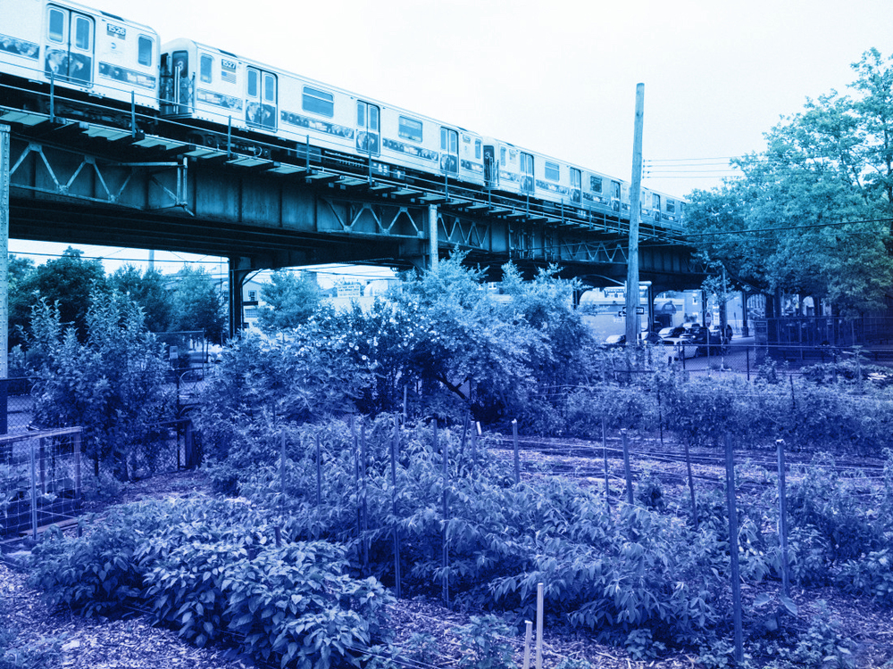 Figure 6 | East New York Farms under livonia avenue 3 train in brooklyn; courtesy of Eric E. anderson, BKLYNR