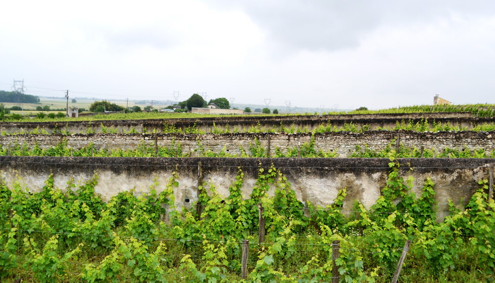 "Figure 3: The ""Walls"" of Clos Cristal near Saumur create a microclimate for the vines."