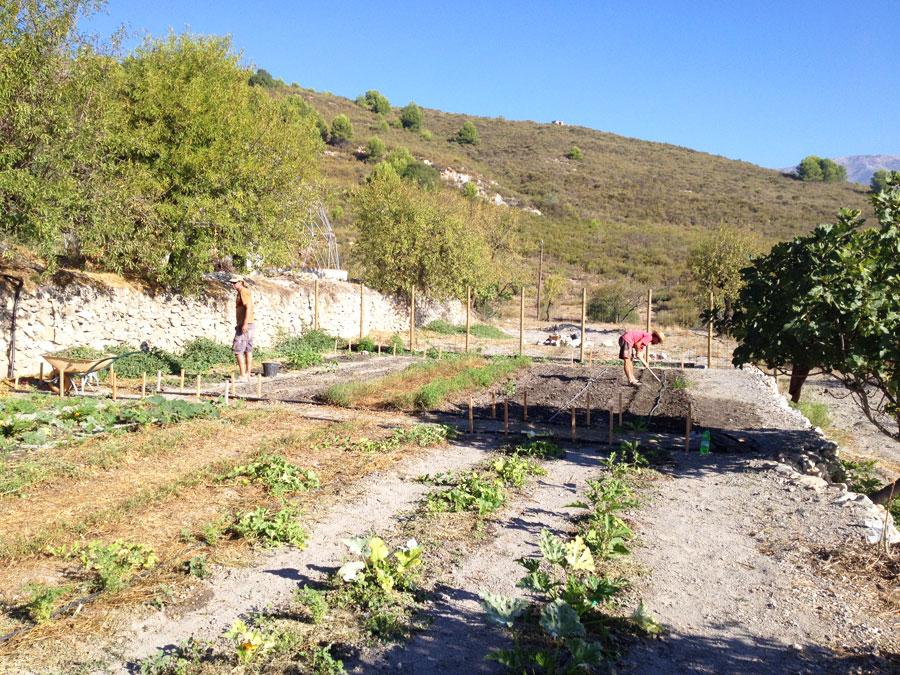 field-planting.jpg