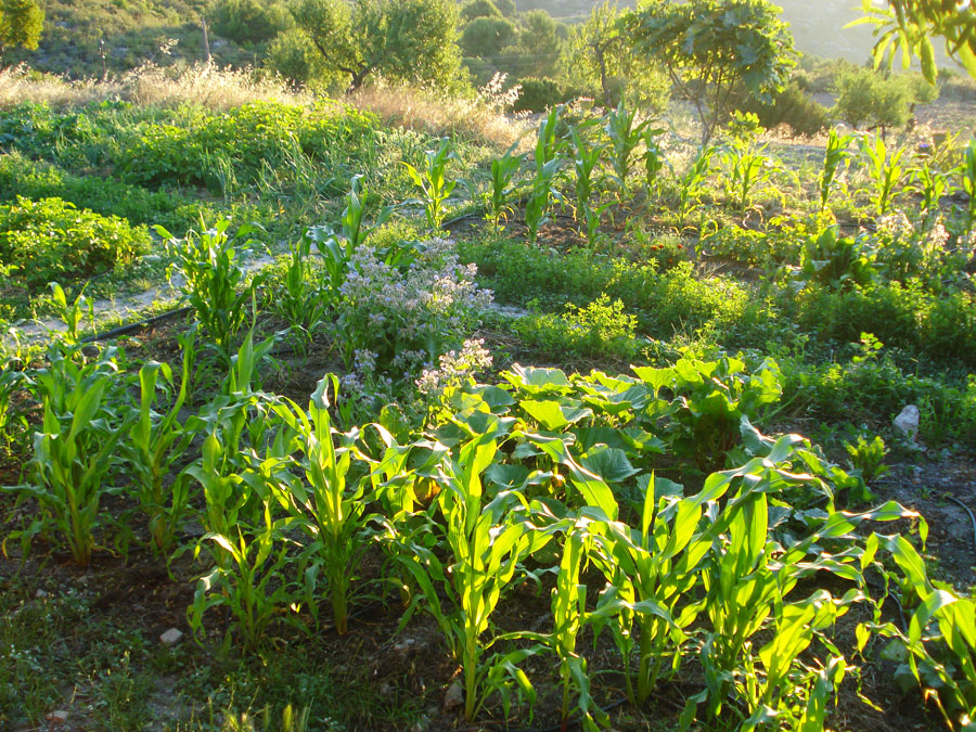 field-polyculture.jpg
