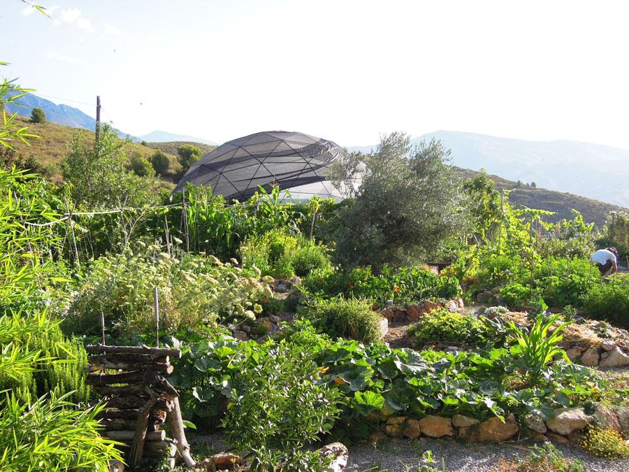 mandala-2012.jpg