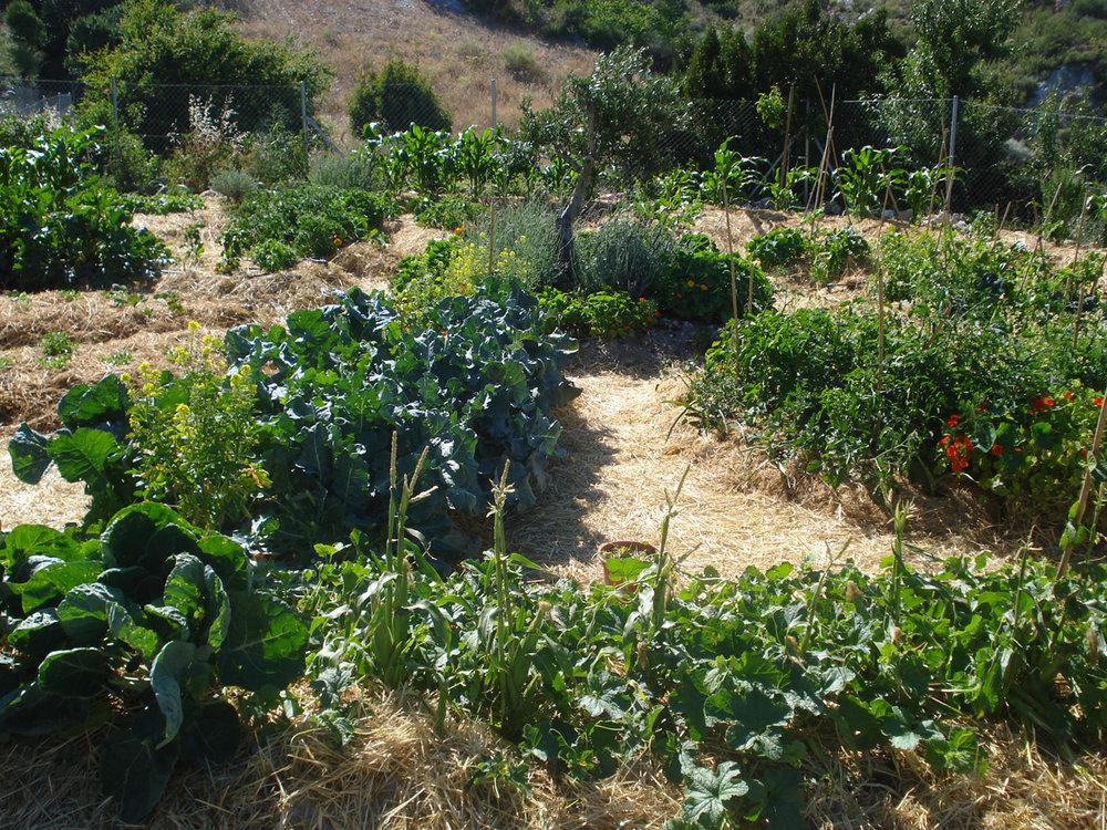 First growing season in the Mandala garden - September 2009