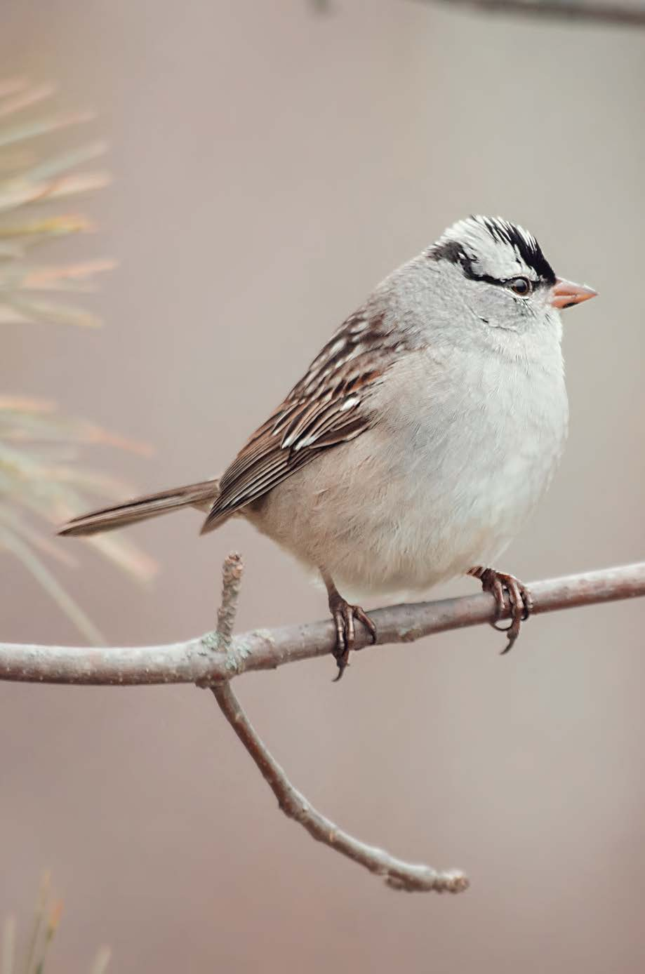 Download the pdf version of the Saginaw  Basin Land Conservancy Field Guide and track down these feathered friends.