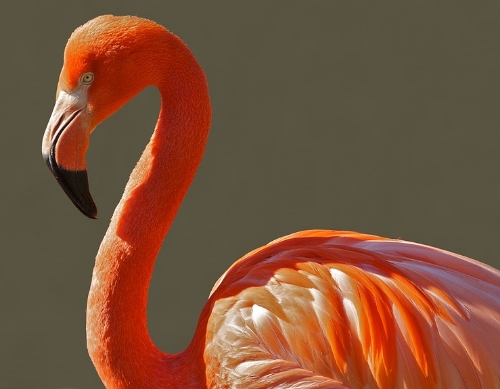 Is a flamingo like a watermark?