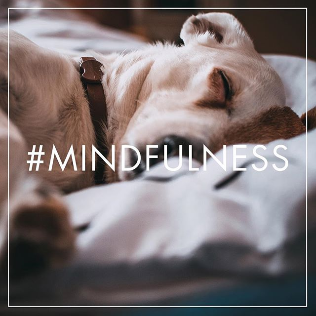 """#mindfulness : """"the quality or state of being conscious or aware of something."""" #lovemydog . . . #nature #theritualofpetcare #apethecary #apothecary #essentialoils #pamperyourdog #doglove #dog #dogs #peaceful #nurturing #eo"""
