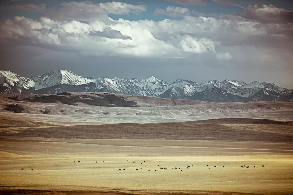 montana-2.jpg