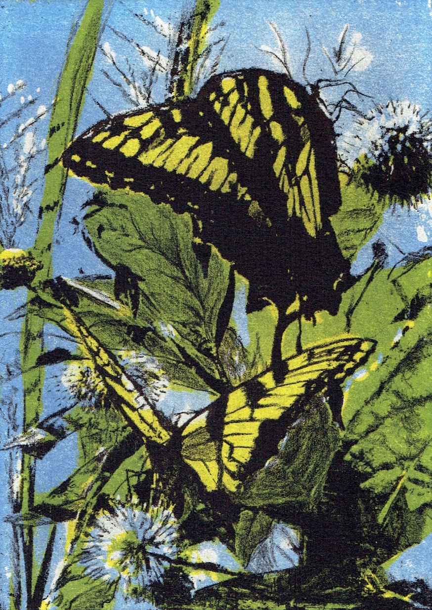 lucy monarchs.jpg