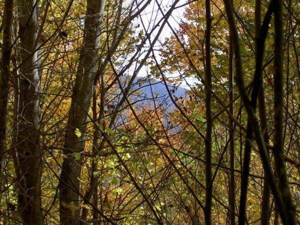 171235 Fall forest 11.jpg