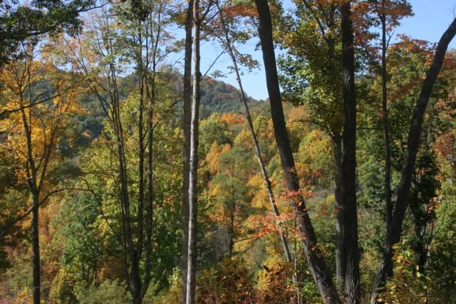 91683 Woods mls.jpg