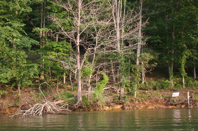 2015-07-07-Lake-Watauga-L.P.-021.jpg