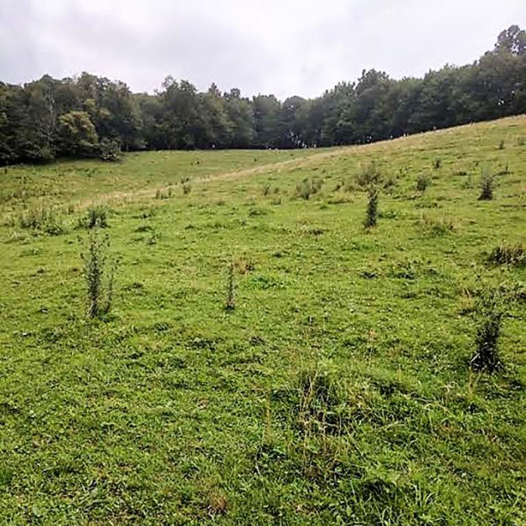 Moore-2.96-acres-1.jpg
