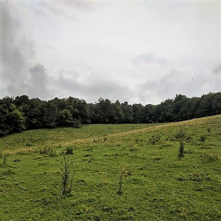 Moore-2.96-acres-3.jpg