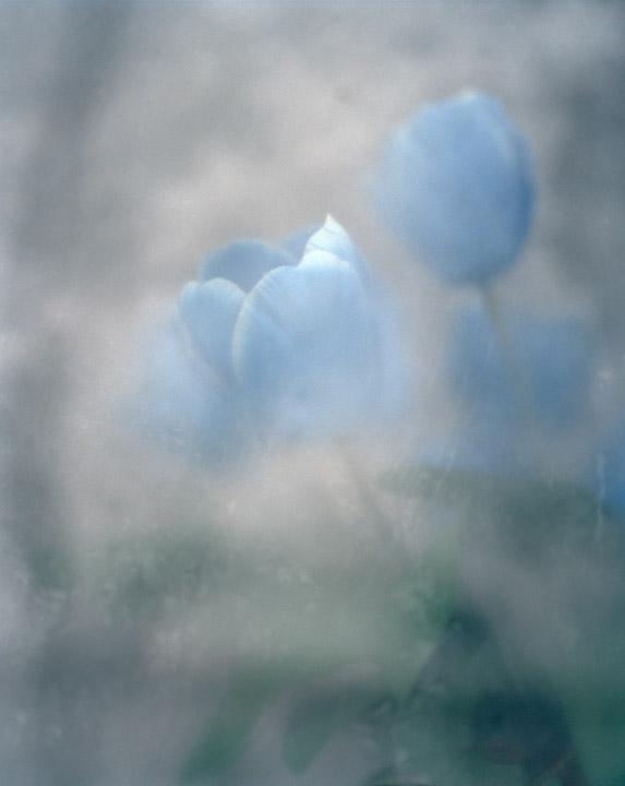 09_Andrew_Miksys_PLASTIC_FLOWERS.jpg