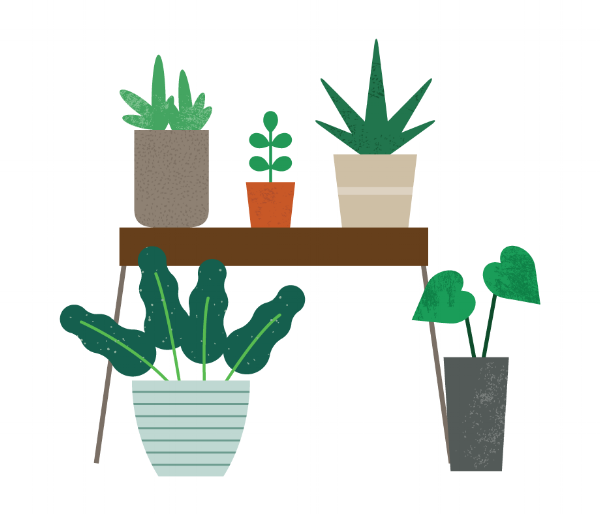 p15-plants-web.png
