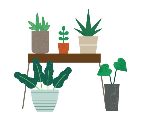 p15-plants-web.png